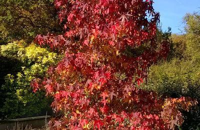 La Feuille d'automne !!