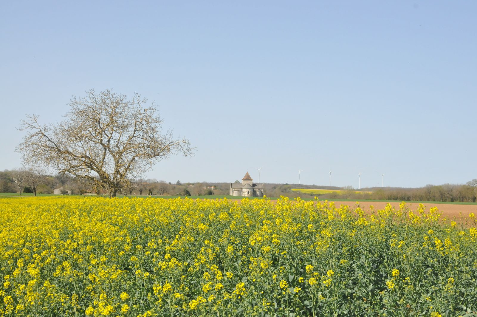 Dans la solitude des champs de colza...