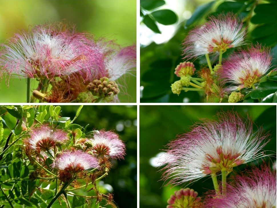 Fleurs du jour (19-16)