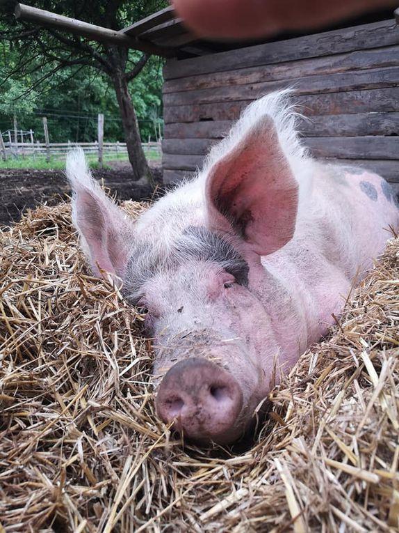 Photos :  La Ferme d'Henni le Cochon