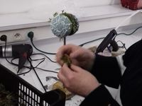 Préparez les fleurs ici le freesia travailler dans le mouvement de l'arrondi