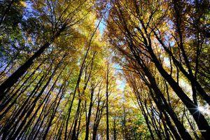 Le gouvernement accélère la privatisation de l'Office national des forêts