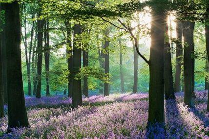 Joyeux équinoxe, c'est le printemps !! : )