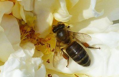 L'apiculteur *