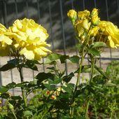 Printemps aux jardins (suite) - Le blog de Pi_ro_94