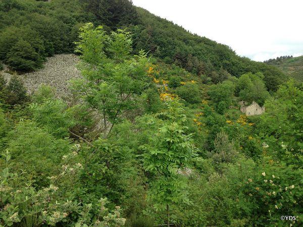 5 juin 2016 : rando dans les environs de Dornas