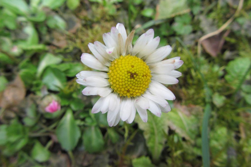 Quand le printemps pointait son nez... avant de s'enfuir à toutes jambes...