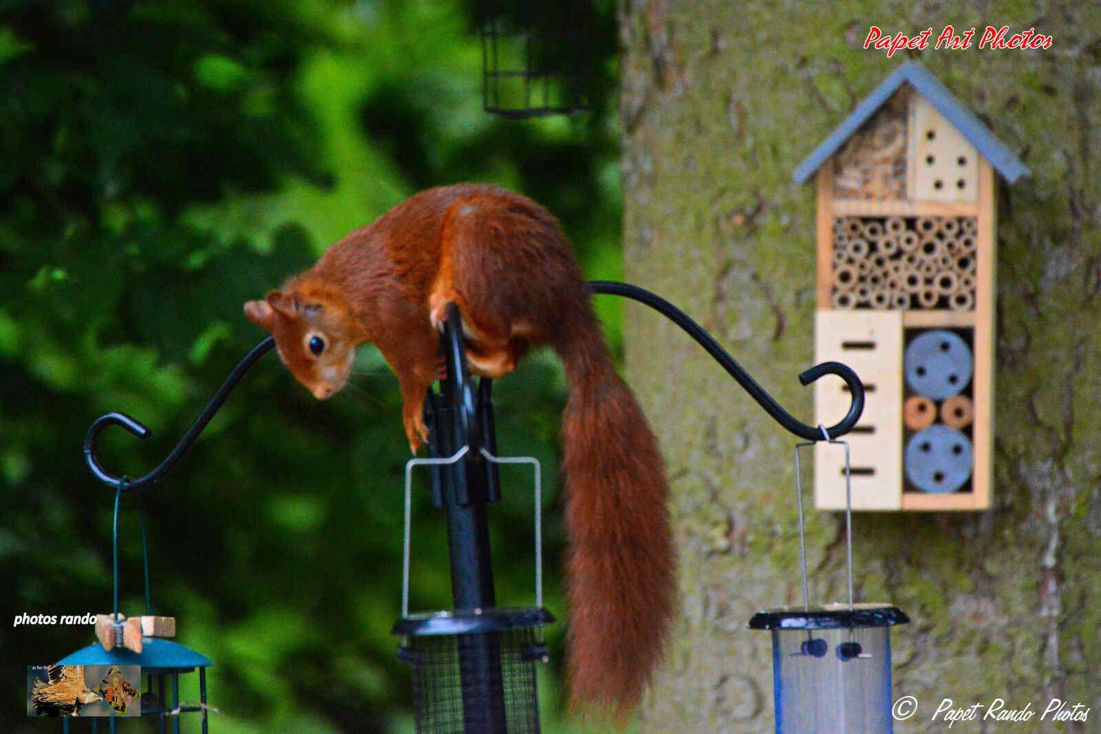En forme l'ecureuil du jardin aujourd'hui,