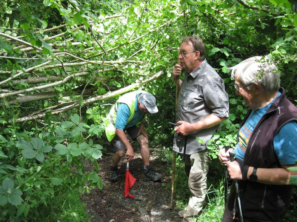 En forêt et dans les chemins : on a marché !