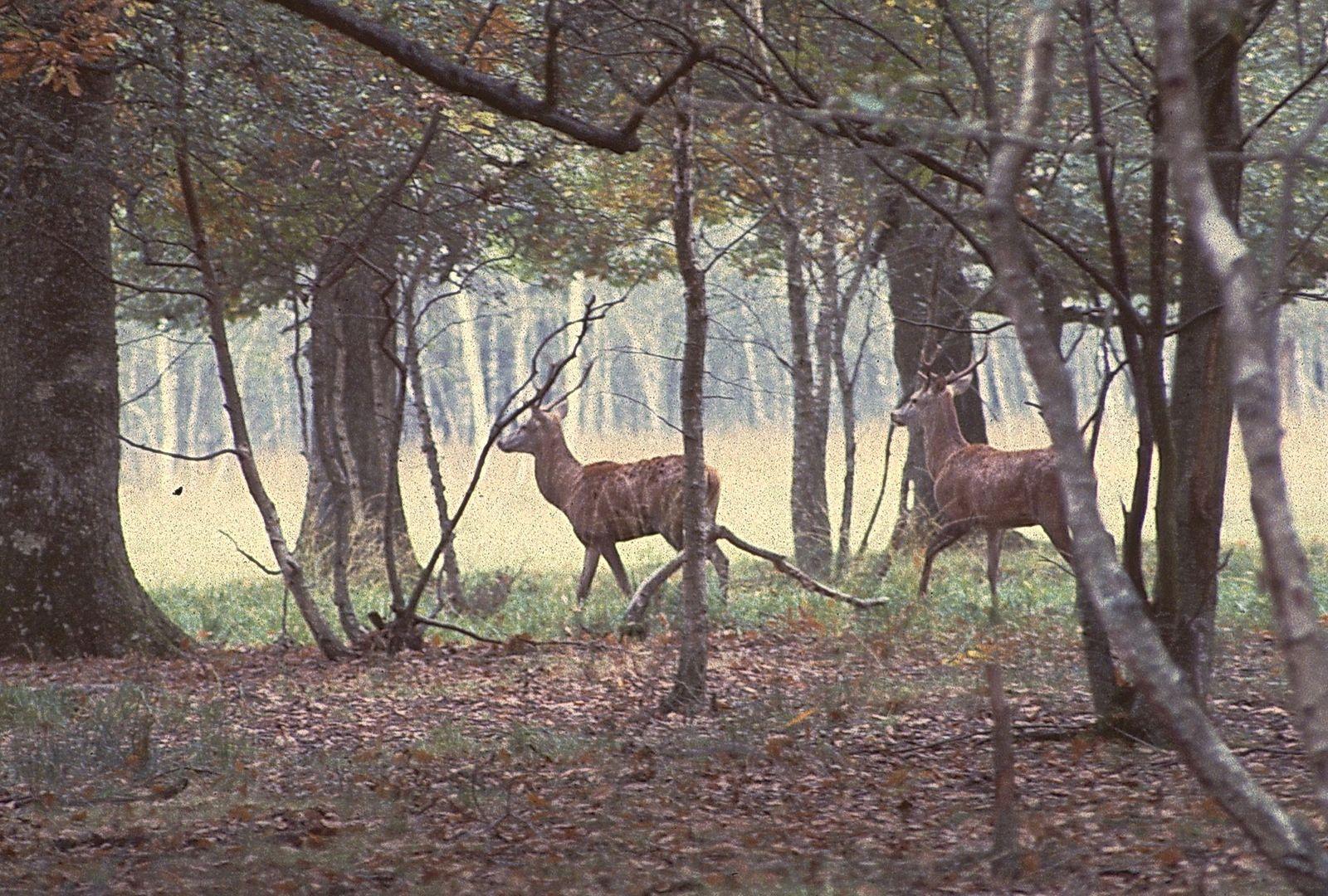 Forêt de Rambouillet 1982