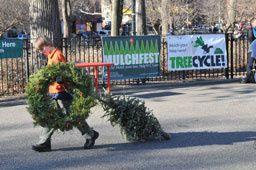 New York recycle ses sapins de Noël