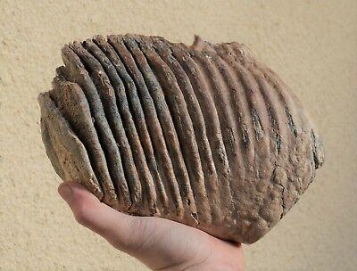 Et soudain on découvre une dent de mammouth dans le nouveau cimetière de Mitry à Aulnay-sous-Bois !