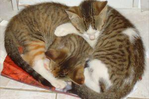 Chatte et ses 2 petits de trois mois - adoptés
