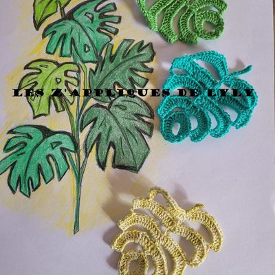 Monstera ou philodendron