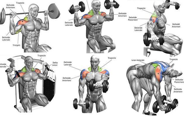 Exercice epaule musculation