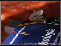 La souris grise ...
