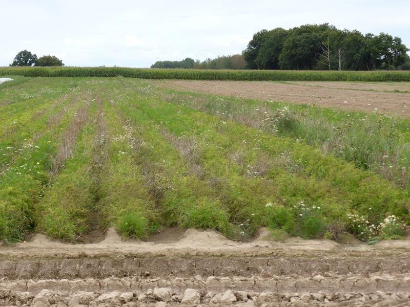 l'occasion de voir aussi quelques travaux des champs... semailles, récoltes de carottes, céleri, choux...ou enfouissage de lisier...(c'est mieux que l'épandage...au moins il n'y a pas l'odeur !!!)