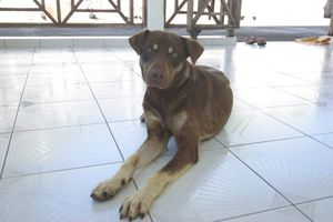 GOOPY - mâle - 1 an et demi - adopté