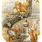 Acajou l'écureuil roux - La minéralité expliquée aux cailloux