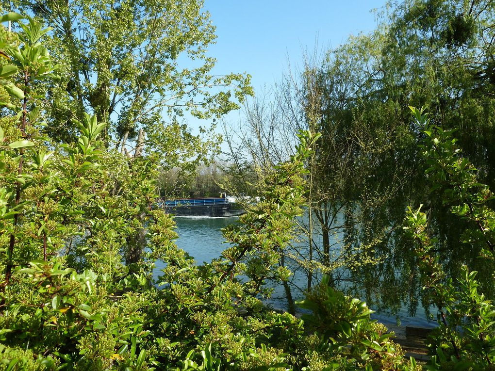 Toutes sortes de beaux arbres bordent le fleuve, où passent de grandes péniches, chargées ou non...