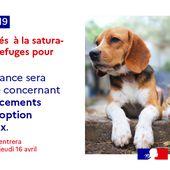 Attestation de déplacement dérogatoire : tolérance accordée dès jeudi pour les déplacements pour adoption d'animaux. - Leblogtvnews.com