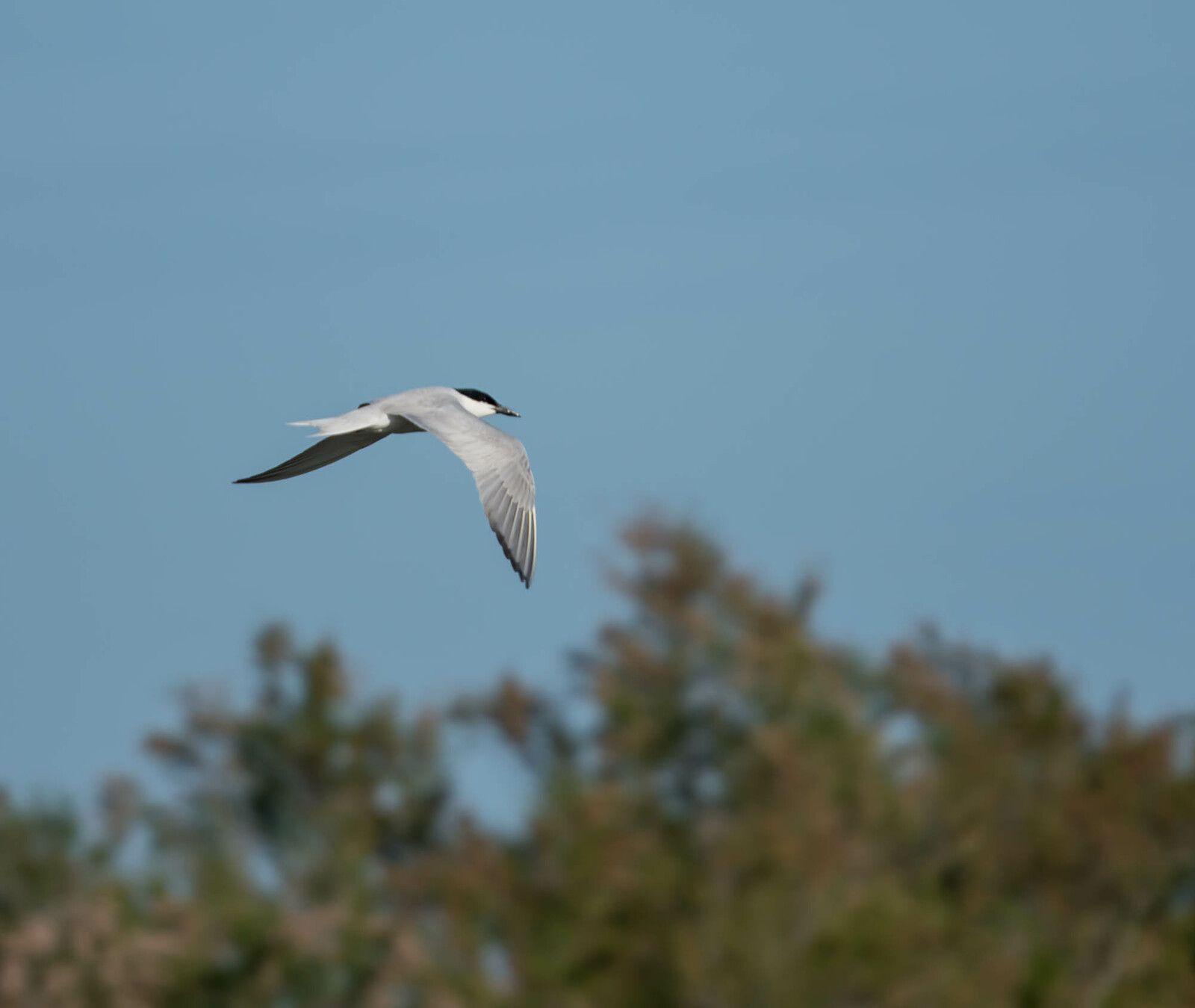 Les oiseaux de Camargue