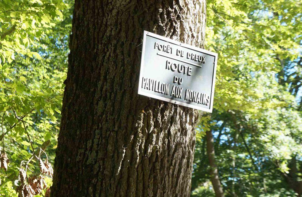A voir, ces clichés et malgré la chaleur, nos marcheurs ont encore passé un  bon moment. Dans la forêt de DREUX.