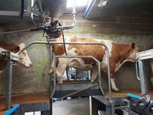 Quand l'agroforesterie et la production laitière se rejoignent.
