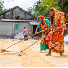 Dix choses que l'agriculture sud-asiatique doit aborder dans l'ère post-pandémique