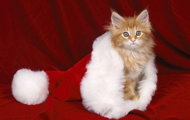 Notre liste 💛 au chat Père Noël