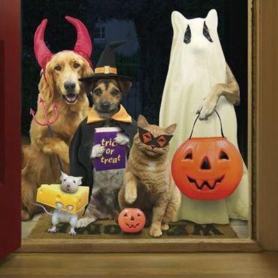 Ideas para tu deco de Halloween