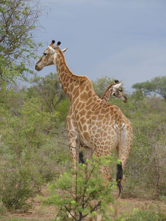 Demandez nous le safari de vos rêves