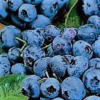 #Blueberry Wine Producers Ohio Vineyards