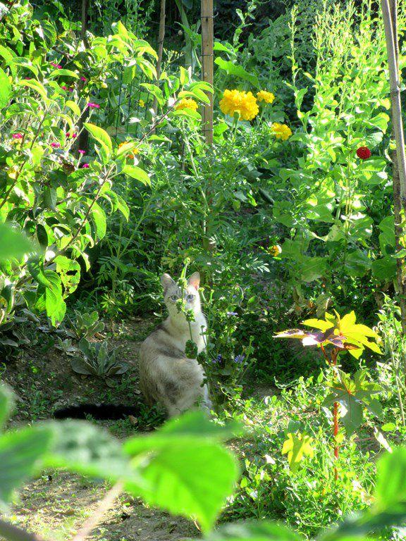 Saint Vaize (17) -le bourg-  joli village saintongeais - 20 juillet 2021