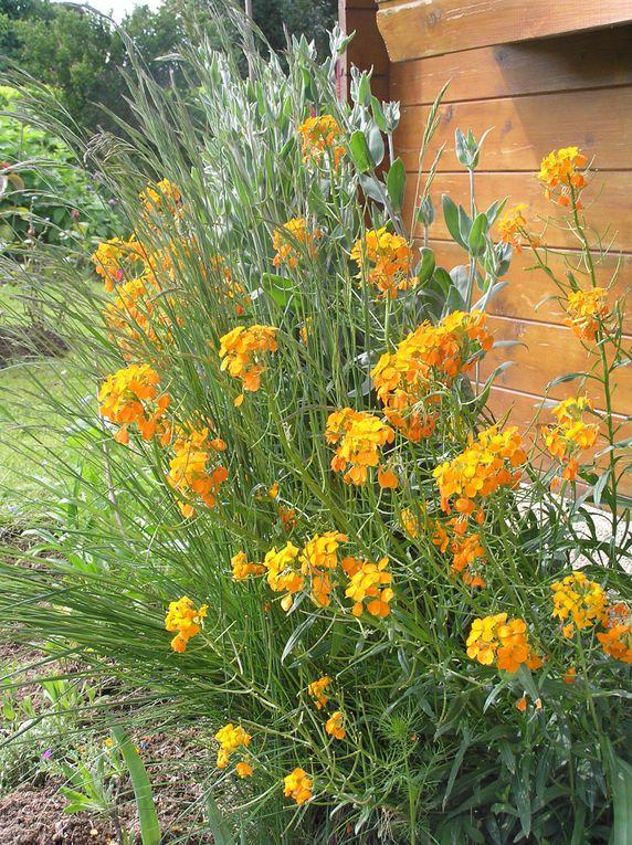 fleurs-et-jardin