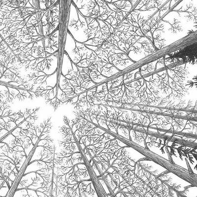 #2 Dans la forêt - Lomig et Florian Haas