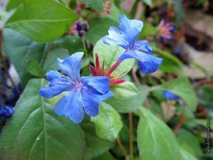 Un nouveau printemps au jardin en Provence...