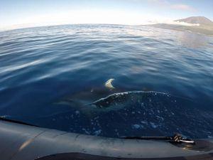 Quelques dauphins - Images extraites des films GoPro / Queue de cachalot photographiée par Fab