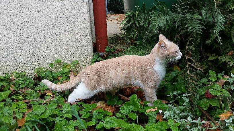 La première sortie dans le jardin. Il y a de nouvelles odeurs partout!