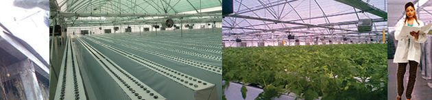 Let The Best Greenhouse Suppliers In India Take Care Of Your Farming