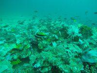 Photos 3 et 4 : nudibranches