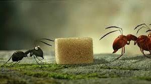 Minuscule: la vallée des fourmis perdues