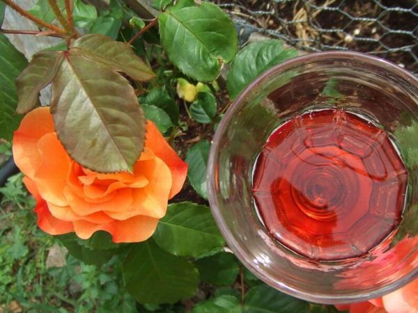 Quelques photos de nos roses autour de la maison à Lisson, qui nous enchantent du printemps jusqu'à l'automne pour certains.