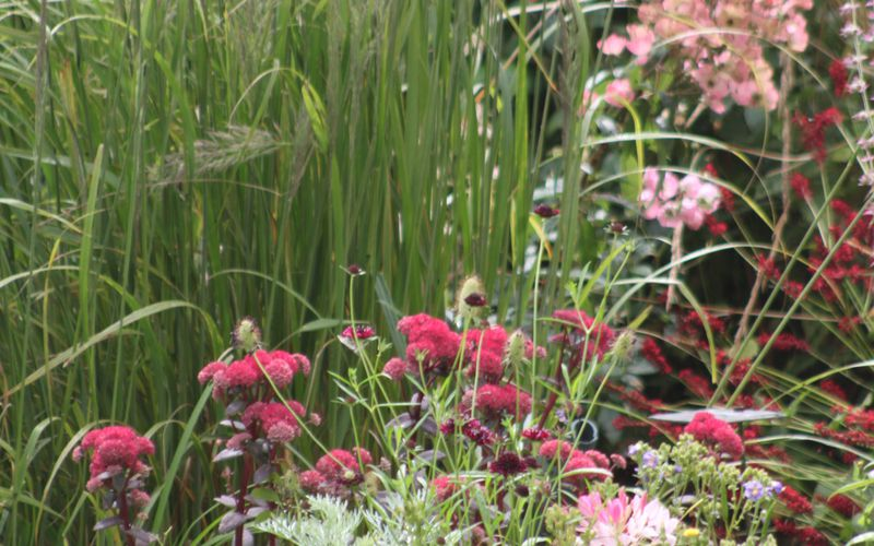 On plante le décor du jardin à l'anglaise !