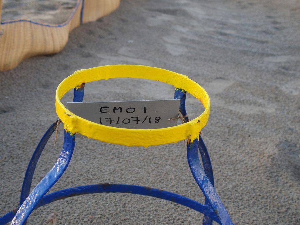 """les protections des nids et les """"couloirs"""" réalisés dans le sable pour guider les bébés vers la mer."""
