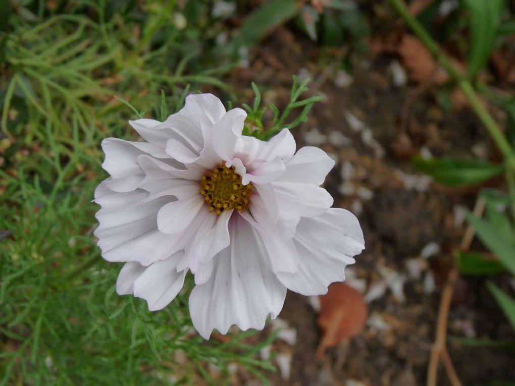Fleurs 118