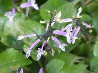 Fleurs du jour (19-04)