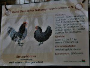 """und die von Wolfgang Holzheimer zur Schau gestellte, noch nicht vom Deutschen Rassegeflügelverband anerkannte Züchtung """"Strupphühner""""."""