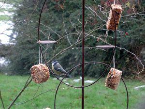 Petits pains de graines pour les oiseaux
