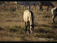 Le sanglier, la mangouste et des ongulés (comme la biche et le cerf élaphe). Ou encore les célébres chevaux andaloux.